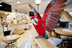 palubní papoušek Charlie